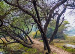 آشنایی با پارک های تهران (قسمت اول: لیست پارک های جنگلی+وسعت و مکان)
