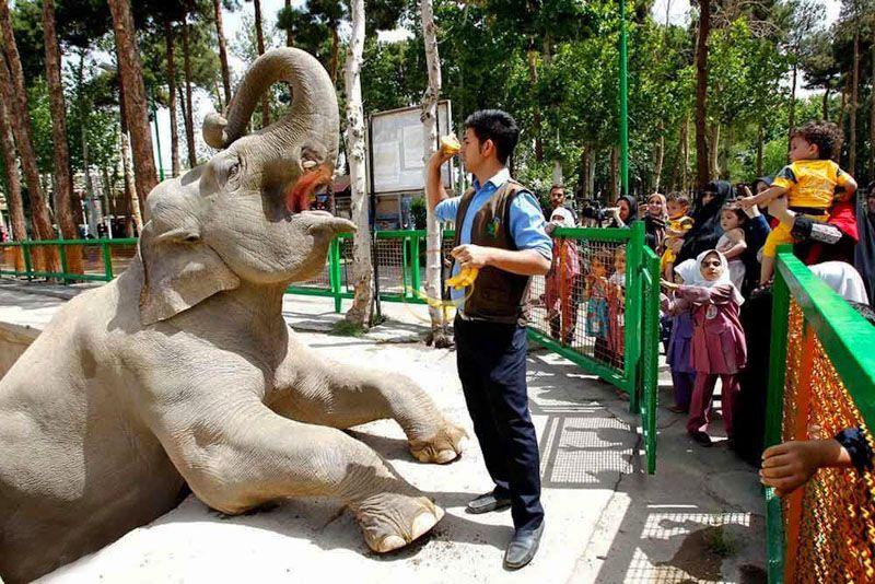 باغ وحش و پارک ارم؛ از مکانهای تفریحی برای کودکان در تهران