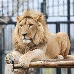 عکس باغ وحش ارم