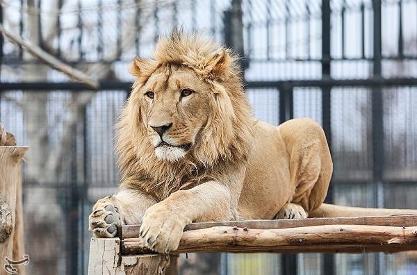 بزرگترین باغ وحش تهران