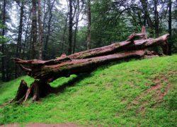 با بزرگ ترین پارک های جنگلی کشورمان ایران آشنا شوید (قسمت ۲)