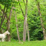 بزرگترین پارک های جنگلی ایران