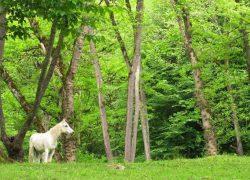 با بزرگ ترین پارک های جنگلی کشورمان ایران آشنا شوید (قسمت ۳)