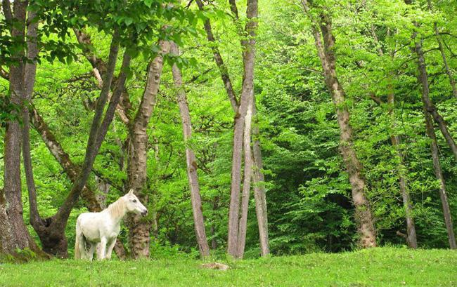 پارک های جنگلی ایران