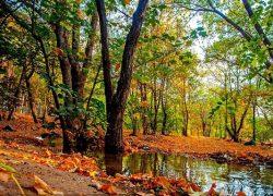 با بزرگ ترین پارک های جنگلی کشورمان ایران آشنا شوید (قسمت ۴)