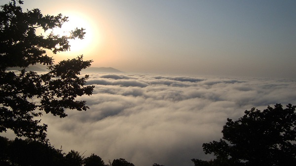 جنگل ابر (2)