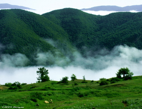 جنگل ابر از دیدنی های شهرستان شاهرود