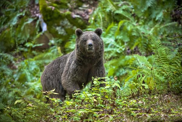 خرس (عکس از دماوند)