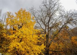سفری پاییزی به روستای آهار + تصاویر