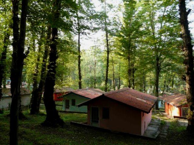 پارک-جنگلی-چالوس4