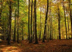 جنگل راش مازندران (رامسر، فیروزکوه، سوادکوه) کجاست؟ حتما ببینید +عکس