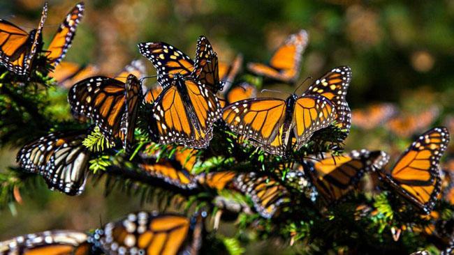 سفری به سرزمین پروانهها + تصاویر بسیار زیبا