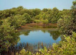 رازهای نهفته و شگرف جزیره حرا در قشم (قسمت ۱)