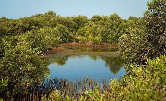 جزیره جنگل حرا در قشم: تجلی زیبایی بی حد و مرز که باید حتما ببینید!! +تصاویر