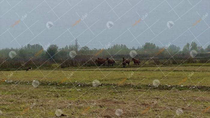 اجاره ویلا با محیط روستایی دهکده پشتیر گیلان