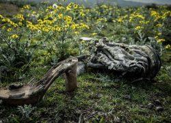 عکس هایی از آلودگی جنگلهای شمال و زبالههای فراوان
