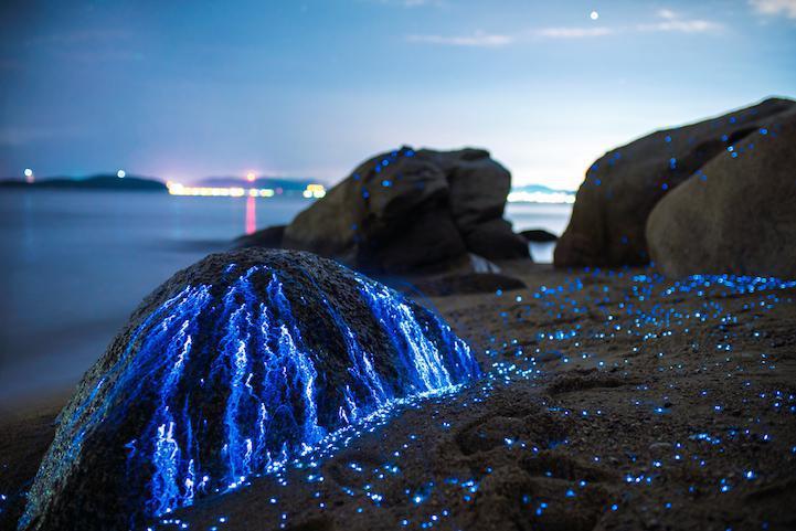 تصاویری بینظیر از سنگهای گریان در سواحل ژاپن