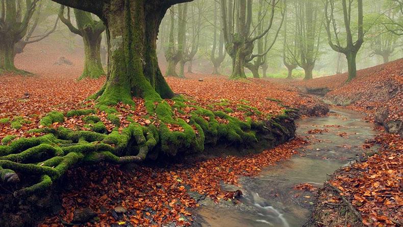 عکس هایی فوق العاده زیبا از پارک ملی اسپانیا به نام Gorbea