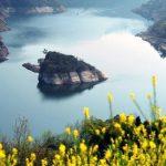 از جزیرهٔ لاکپشتی در چین چه می دانید؟