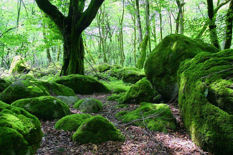 جنگل های دوهزار و سه هزار: بهترین جای شمال برای مسافرت در پاییز