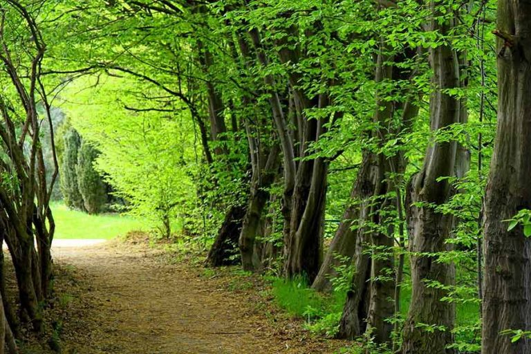 جنگل گرگان یکی از بهترین جای شمال برای مسافرت در پاییز