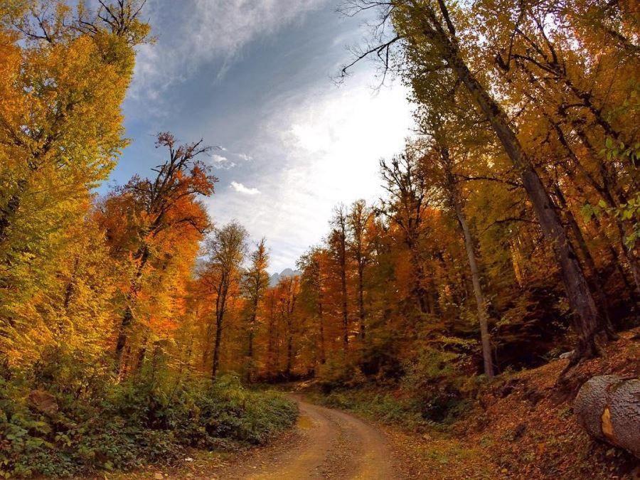 جنگل راش یکی از مقاصد گردشگری پاییز