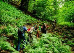 دیدنیهای جنگل هلی دار سوادکوه در استان مازندران