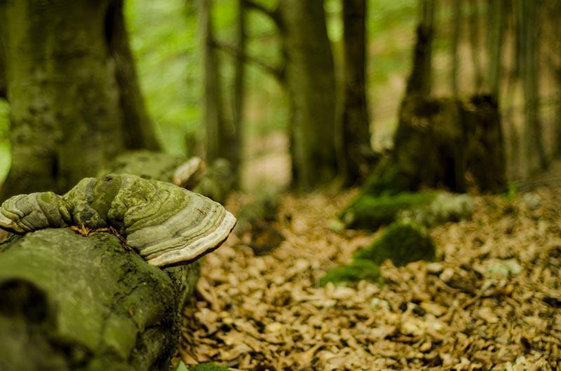 جنگل هلی دار کجاست