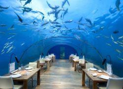 رستوران Subsix: رستورانی در زیر آب + تصاویر