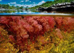 عکس هایی از رودخانهی ۵ رنگ بسیار زیبا در کلمبیا (حتما ببینید)
