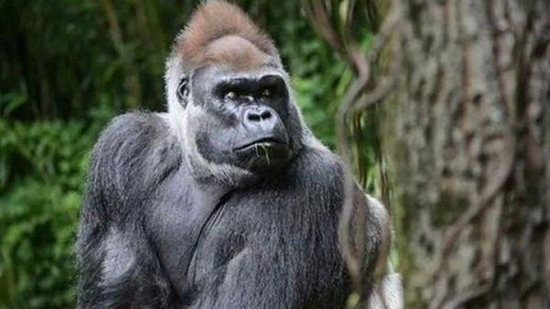 باغ وحش برانکس نیویورک یکی از بزرگترین باغ وحش جهان