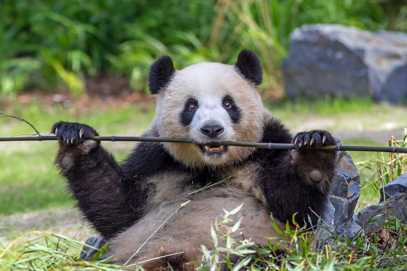 باغ وحش تورنتو یکی از بزرگترین باغ وحش در جهان