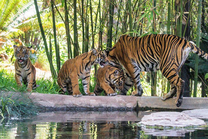 باغ وحش سن دیگو یکی از بزرگترین باغ وحشهای جهان