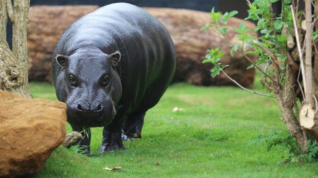 باغ وحش لندن از بزرگترین باغ وحش جهان