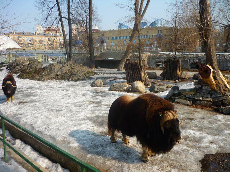 باغ وحش مسکو در روسیه از بزرگترین باغ وحش جهان