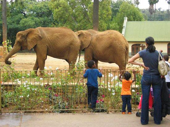 باغ وحش ملی آفریقای جنوبی یکی از بزرگترین باغ وحشهای جهان
