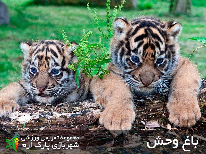 باغ وحش ارم؛ از دیدنی ترین جاهای دیدنی تهران و جای تفریحی تهران