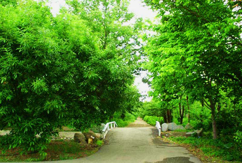 مجموعه رویشی زاگرس در باغ گیاهشناسی ملی