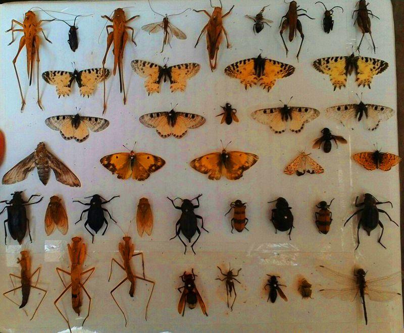 موزه حشرات تهران