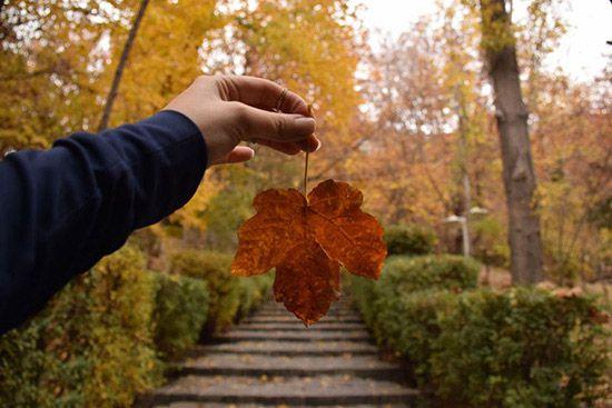 نمایی از پارک جمشیدیه پاییز