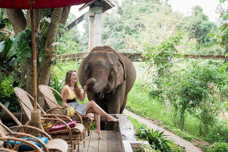 کمپ فیل های آبی از جاهای دیدنی تايلند