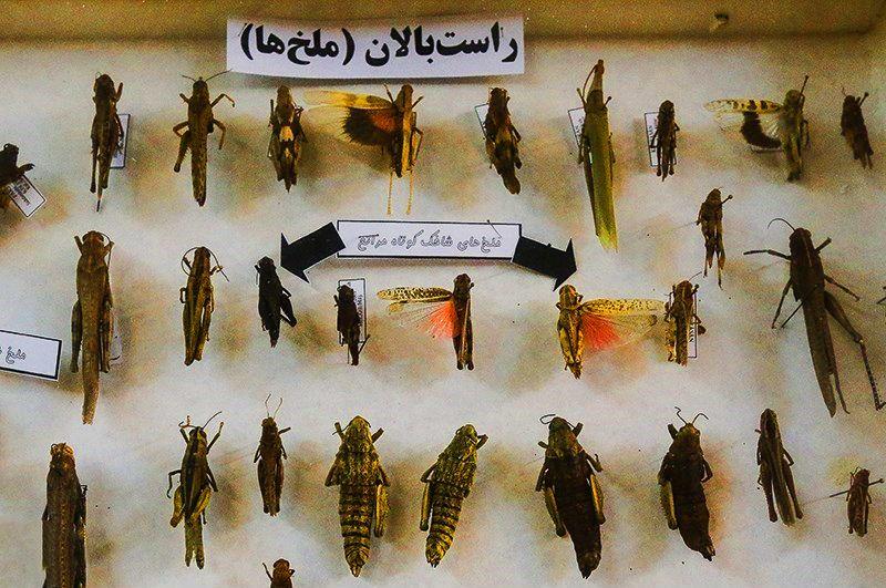 موزه حشره شناسی