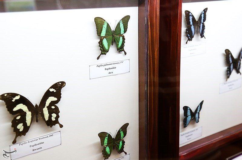 موزه حشرات در تهران