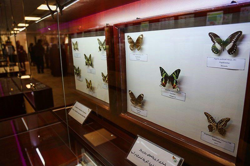 موزه ی حشرات