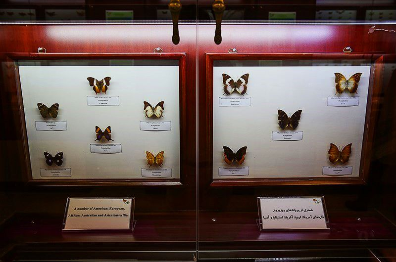 موزه حشرات هايك ميرزا