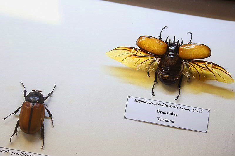 موزه حشرات کجاست